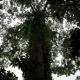 La foresta tropicale,regno della biodiversità