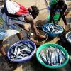 Fruta pao e pesce sono risorse, l'olio di palma è un problema