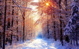 Golden-Winter