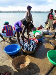 Sao Tomé, le palaié (venditrici di pesce) si riforniscono di pesce appena pescato    (2015)    (foto Giorgio Pagano)
