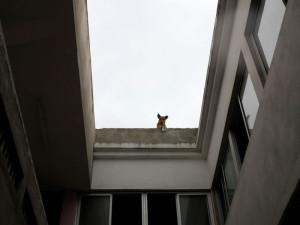Sao Tomè, un cane  (2015)  (foto Giorgio Pagano)