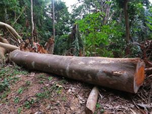 Sao Tomé, Parco d'Obò, la deforestazione (2015) (foto Giorgio Pagano)